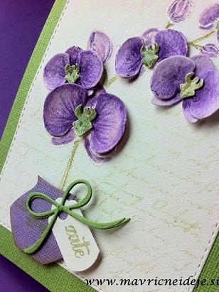 Najlepši par orhideja vijola